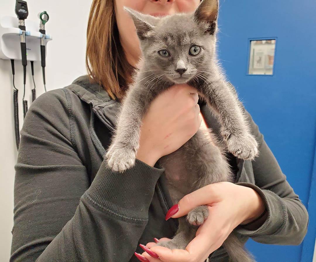 Félix en veterinario