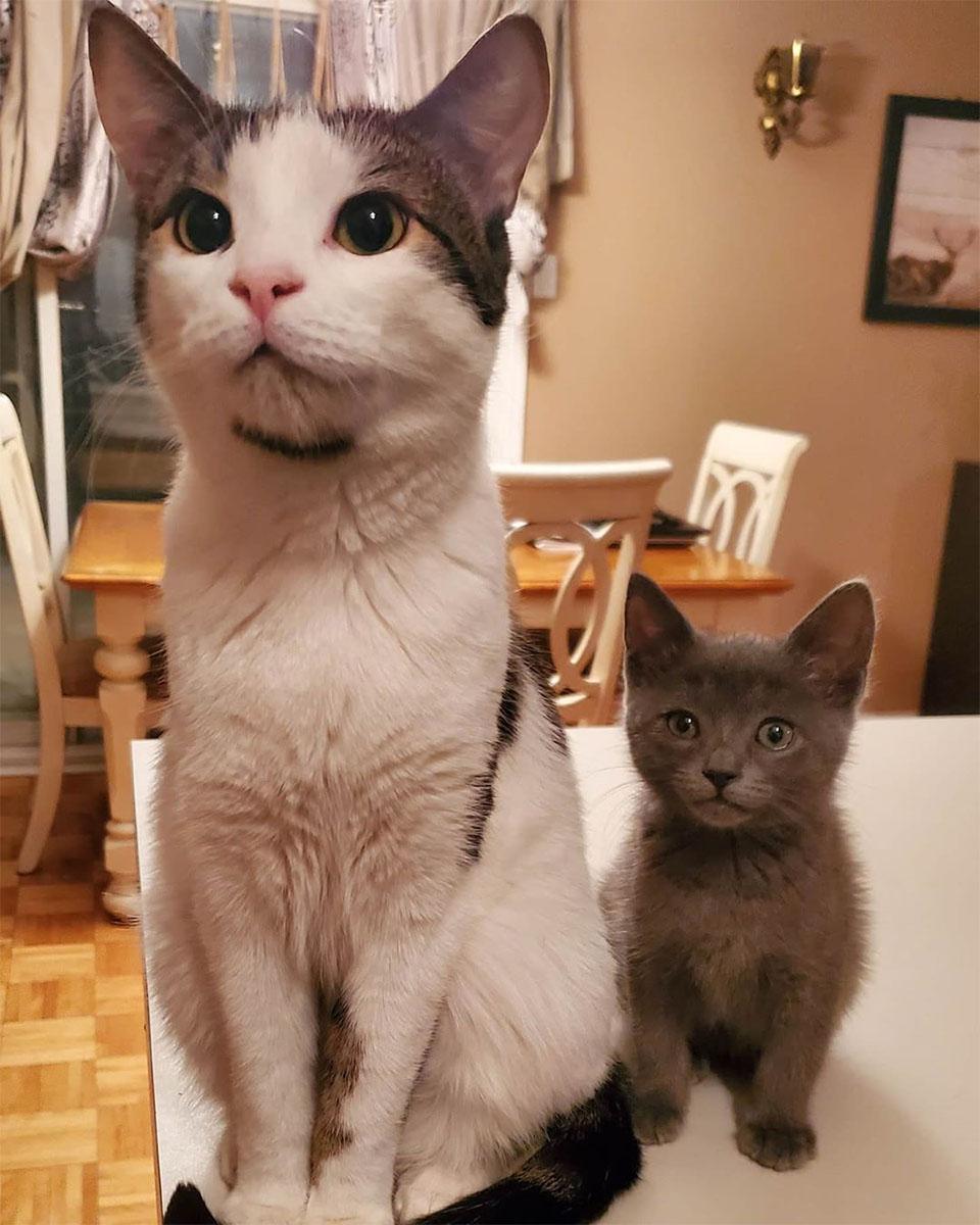 Félix y Trunks