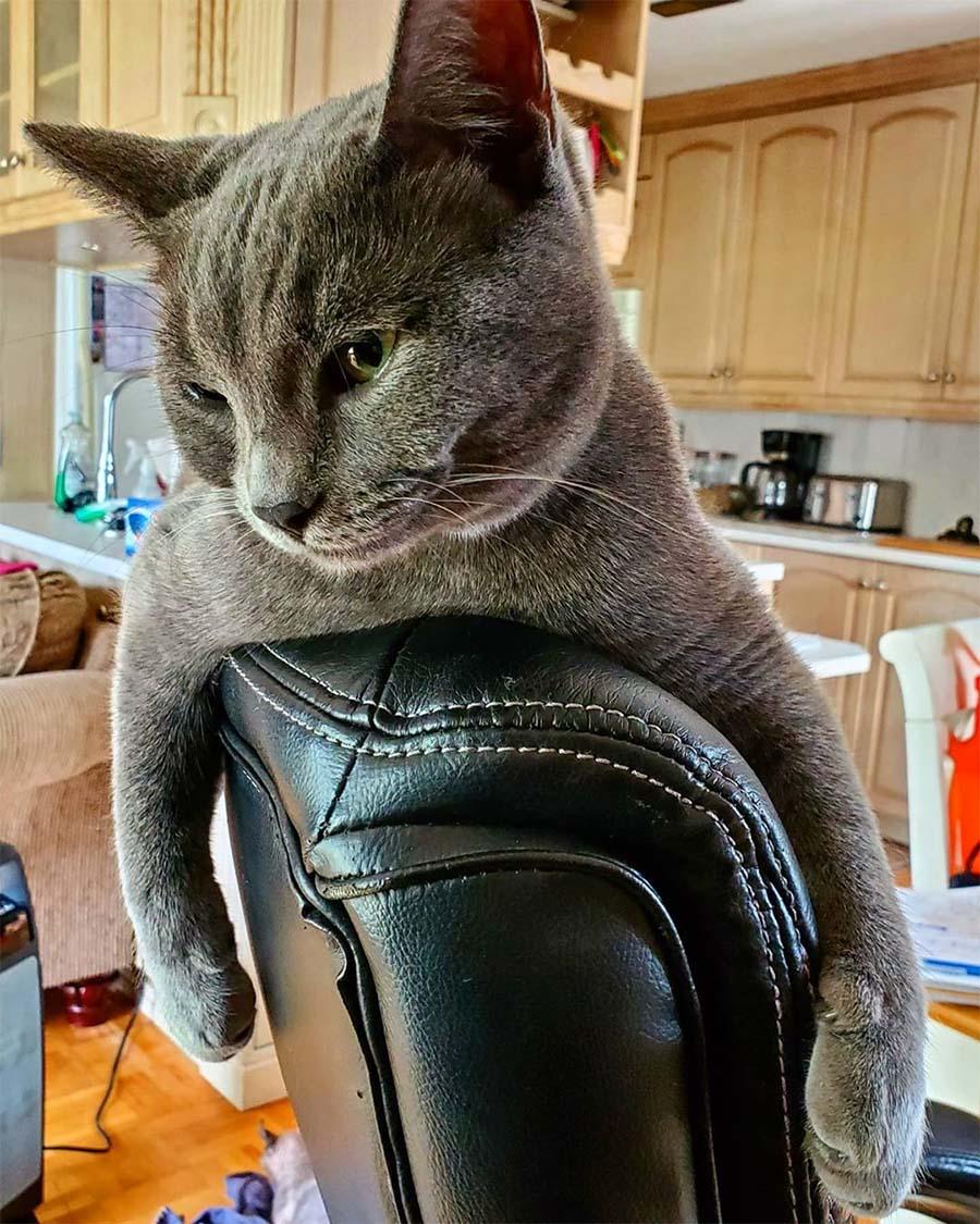 Félix en silla