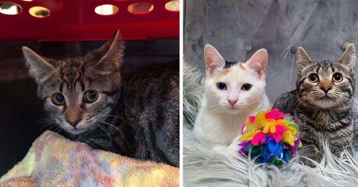 Gatito tímido encuentra confianza en otro gato después de ser rescatado
