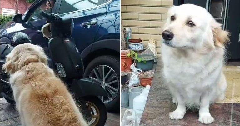 Perro no quiere que su papá vaya a trabajar así que muestra sus 'ojos tristes'