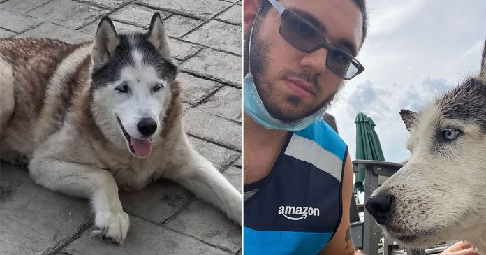 Repartidor salta a piscina para salvar un perro