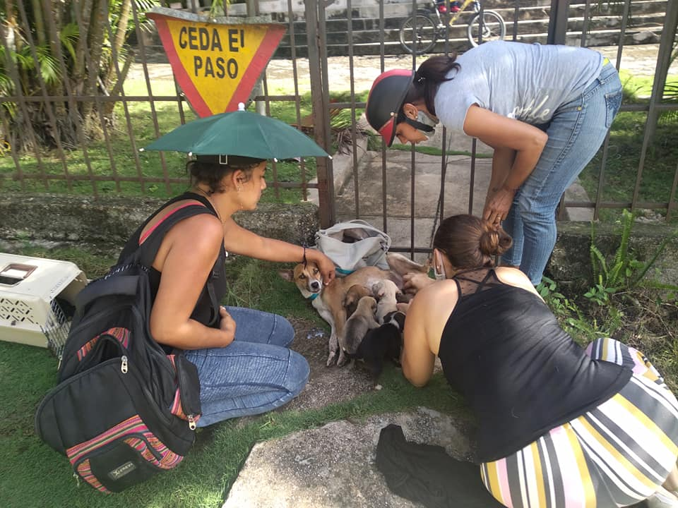Activistas rescatan animales