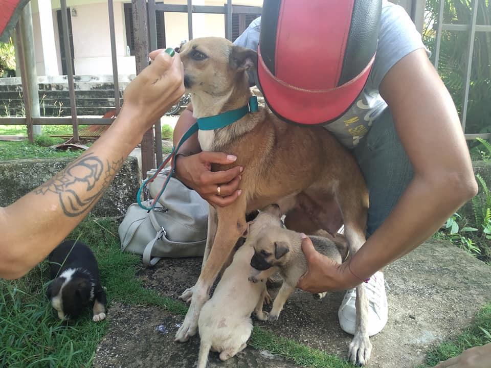 Activistas rescatan animalitos