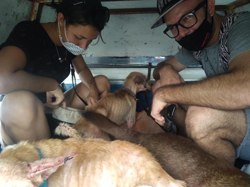 Activistas rescatan perritos