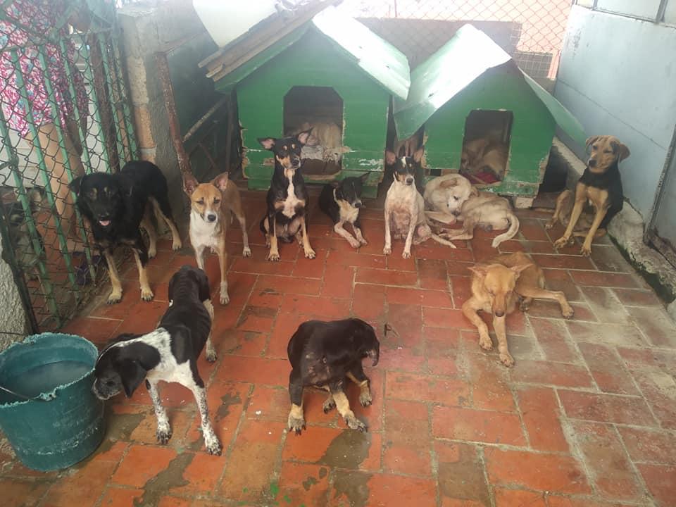 Animalitos en refugio