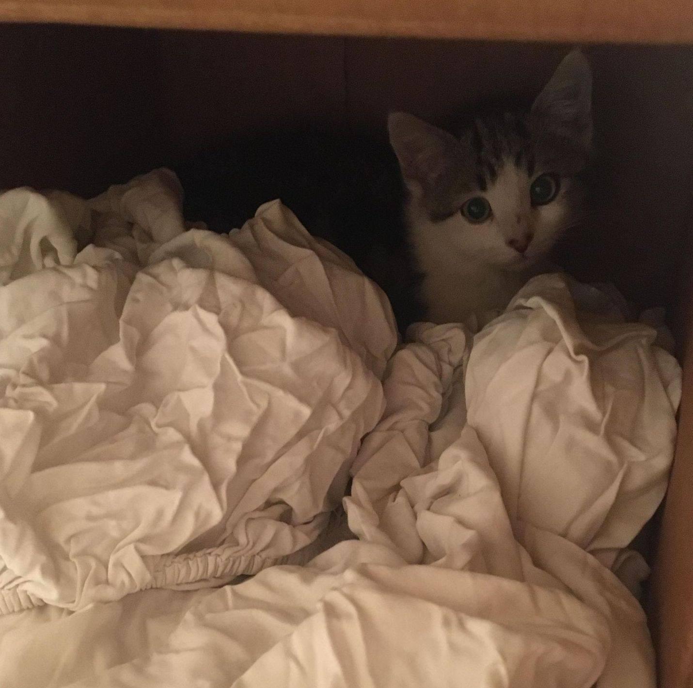 Felino en hogar de acogida