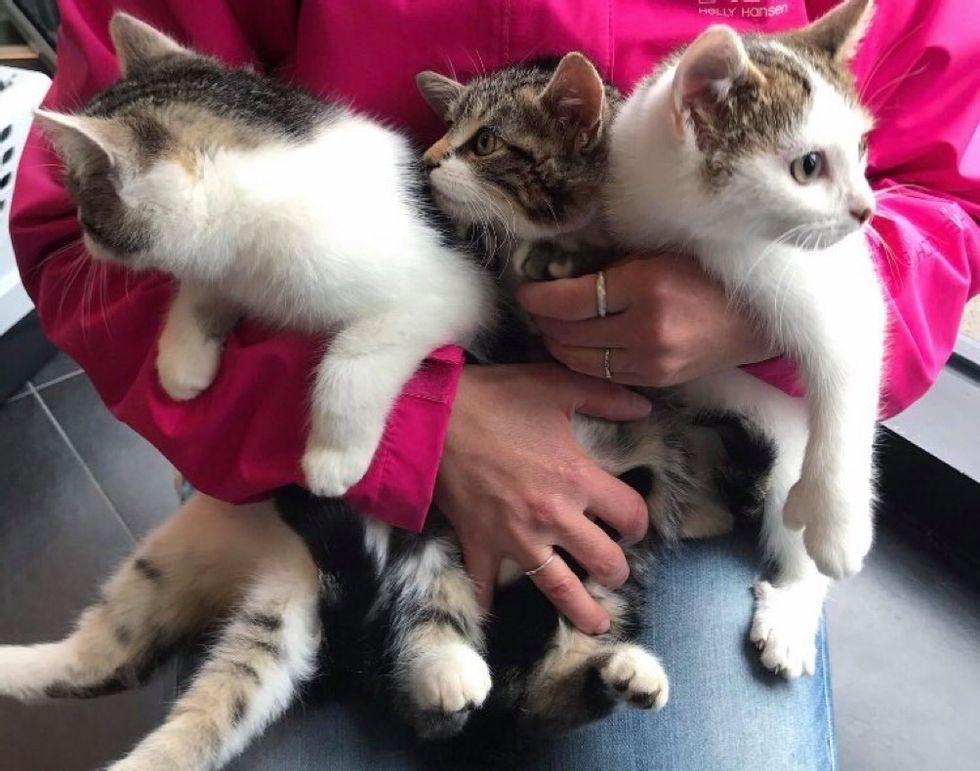 Gatitos hermanos
