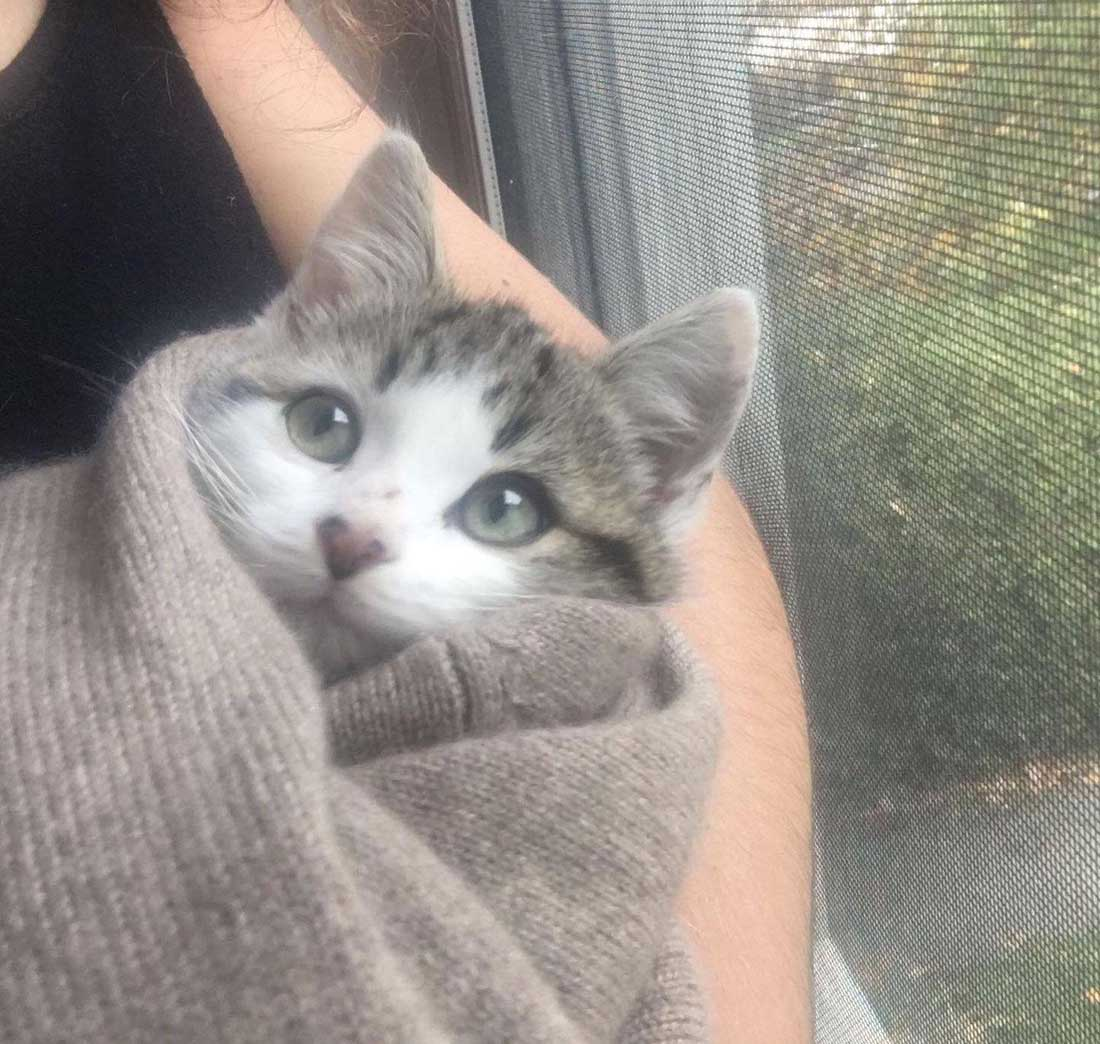 La nueva casa trae un familia de gatos