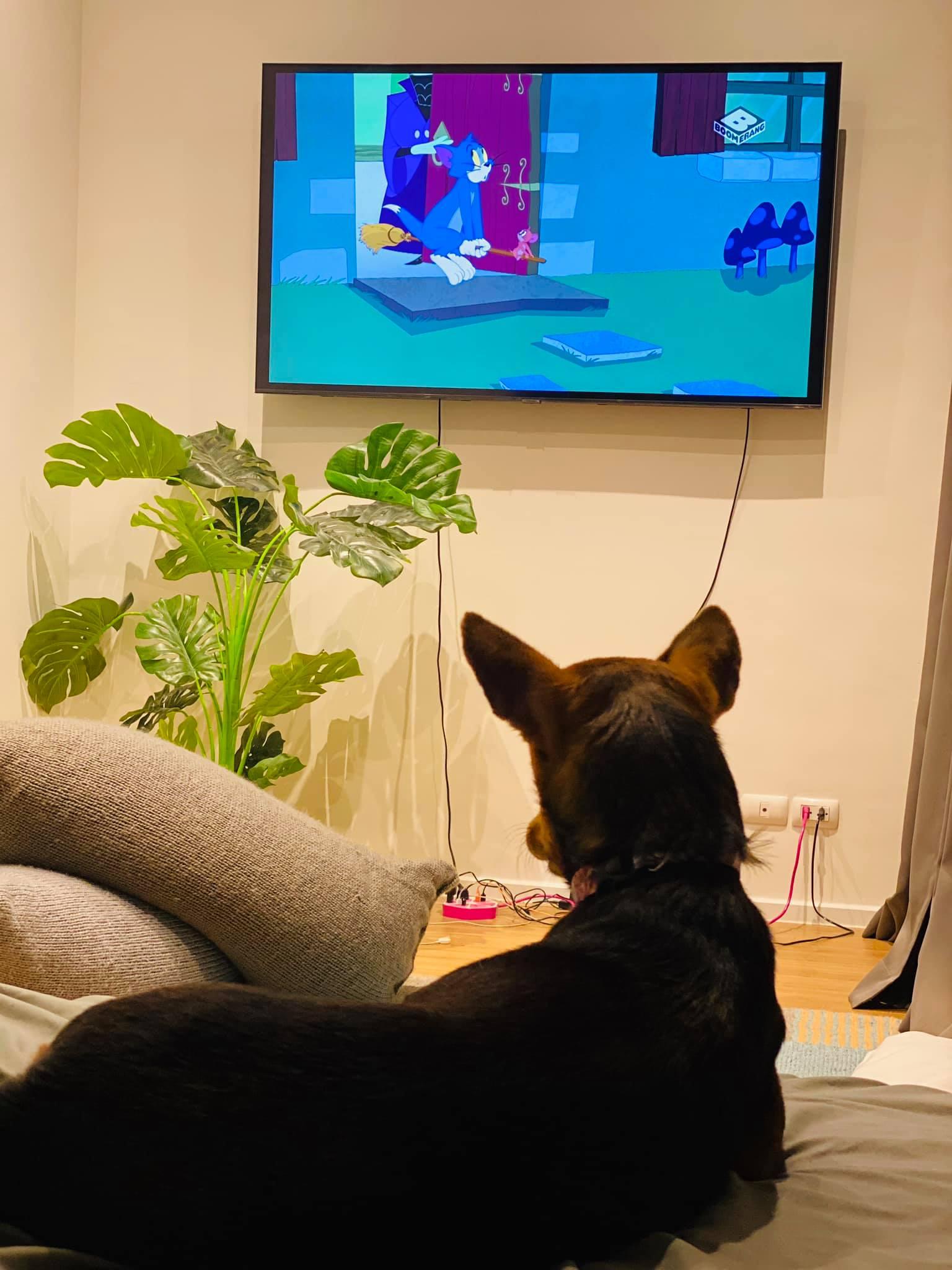 Perrito ve televisión
