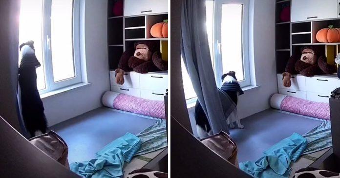 Perro espera a mamá 10 horas ventana