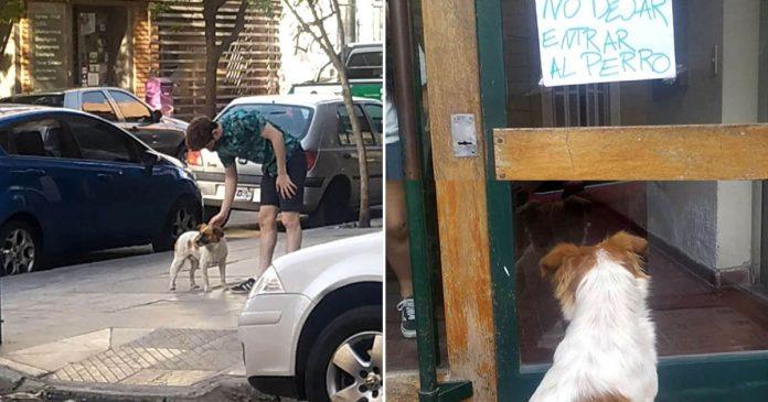 Perro llevó rescatistas hasta un letrero colocado
