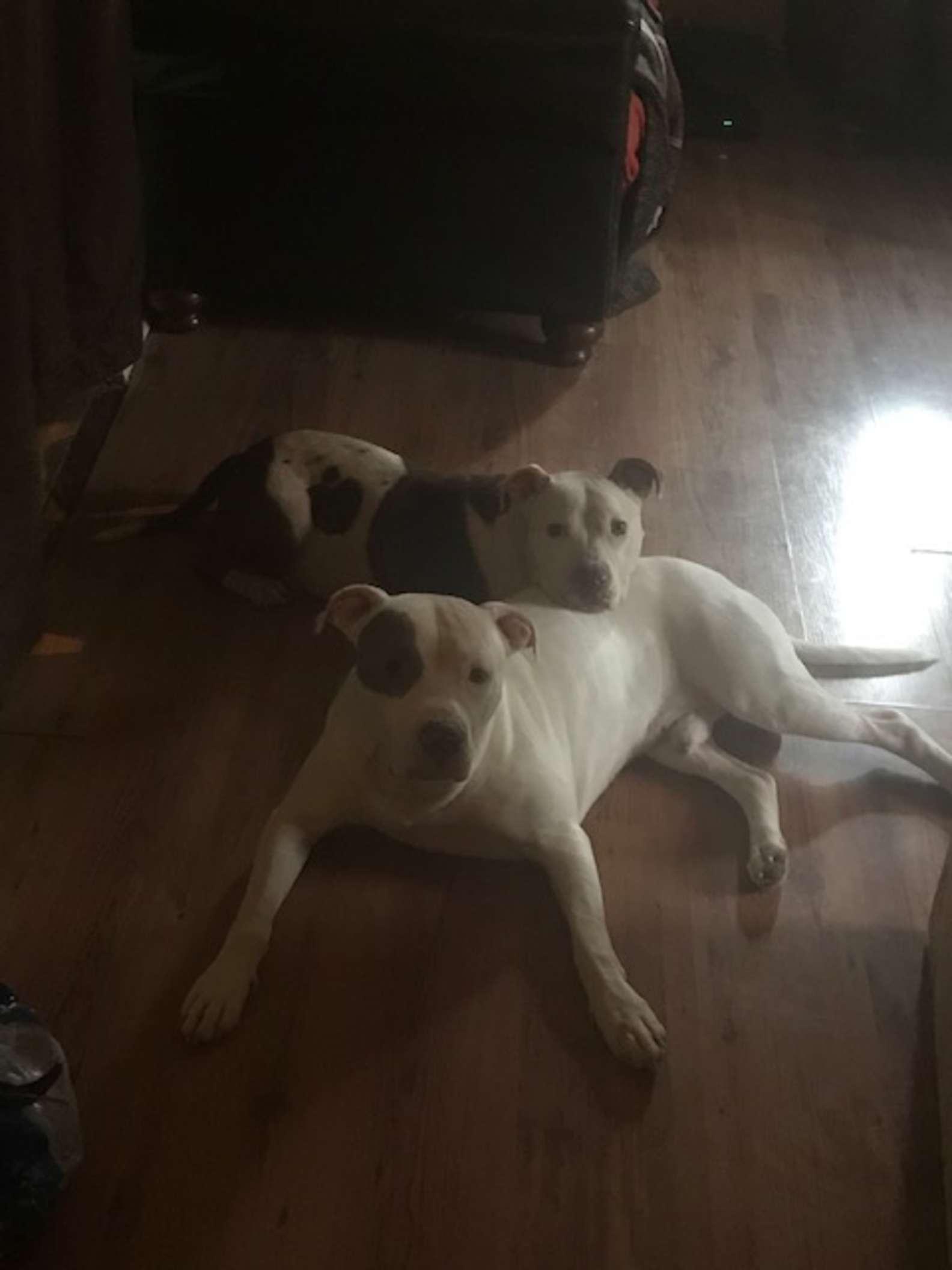 Pitbull y su hermano