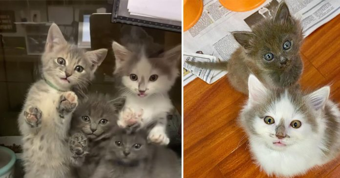 5 gatitos encontrados juntos son tan felices de recibir ayuda