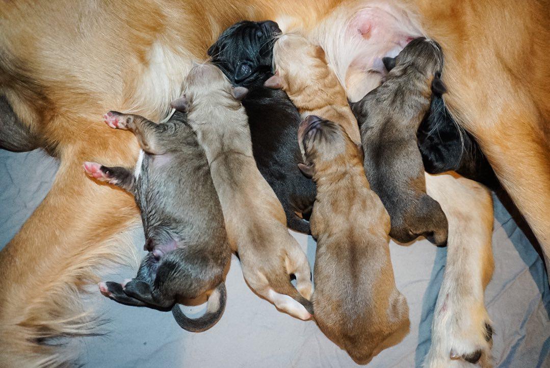Cachorros alimentándose
