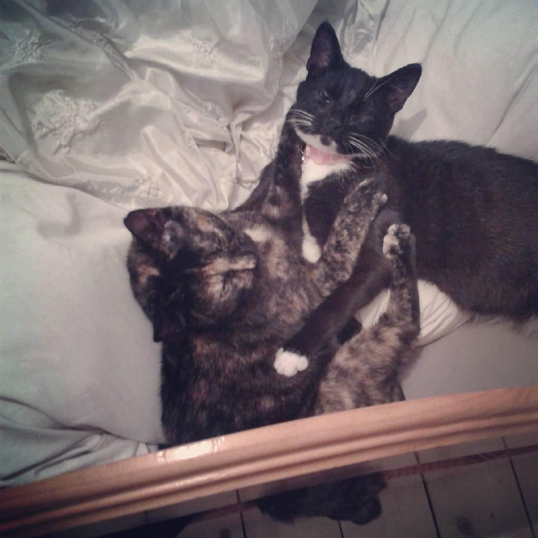 Dos gatitos jugando