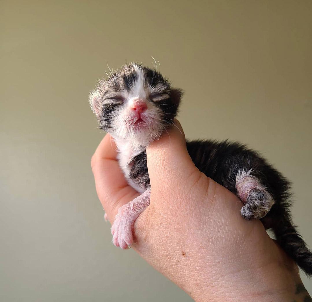 Gatito de 3 patas rescatado