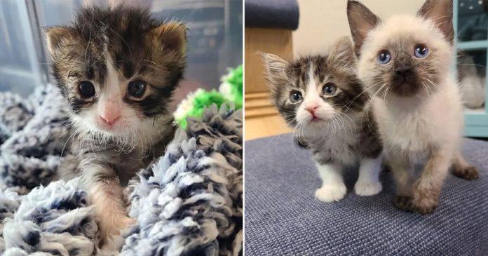 Gatito de 3 patas sigue ritmo de hermanos