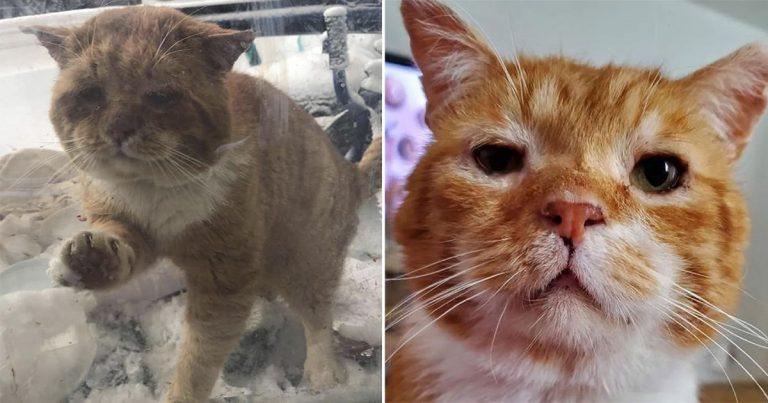 Gato aparece en la puerta y pide que lo dejen entrar después de pasar años en las calles