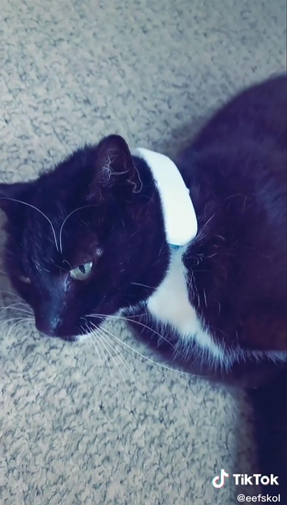 Gato usa rastreador