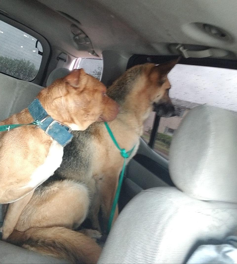 Mujer se gana confianza perros