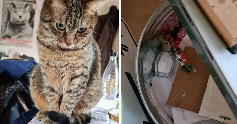 El pasatiempo favorito de este gato es arrojar las cosas de la casa a la basura