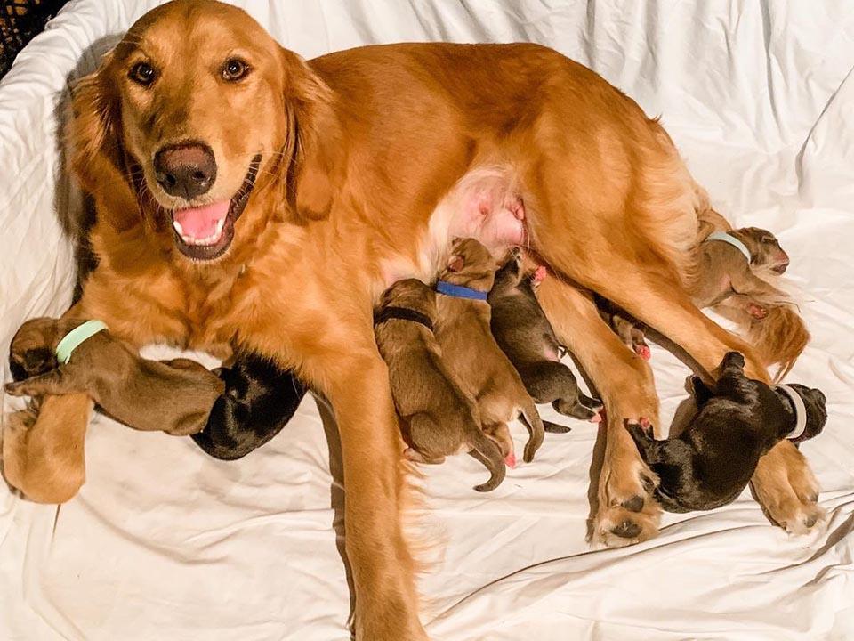 Perrita y sus bebés