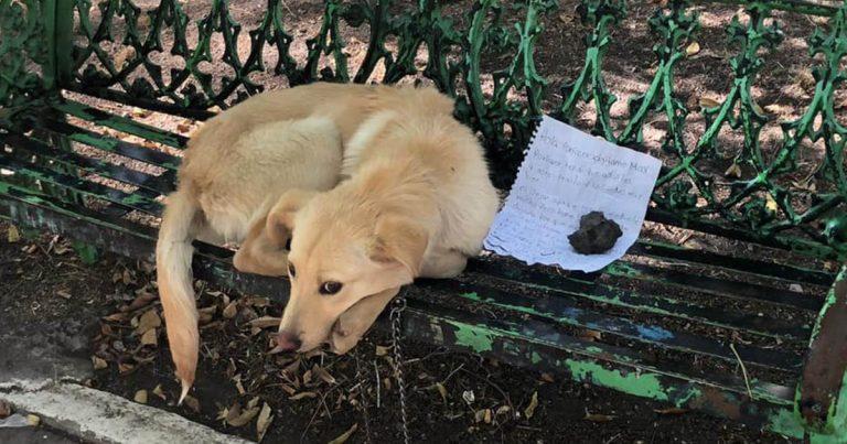 Perrito es dejado en una banca junto a la carta más conmovedora