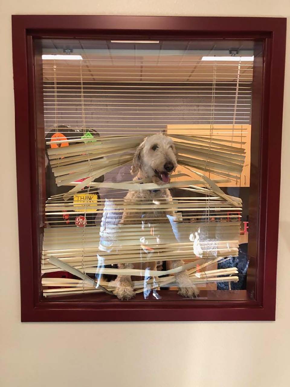 Perrito sigue a los niños al colegio y termina en la oficina del director