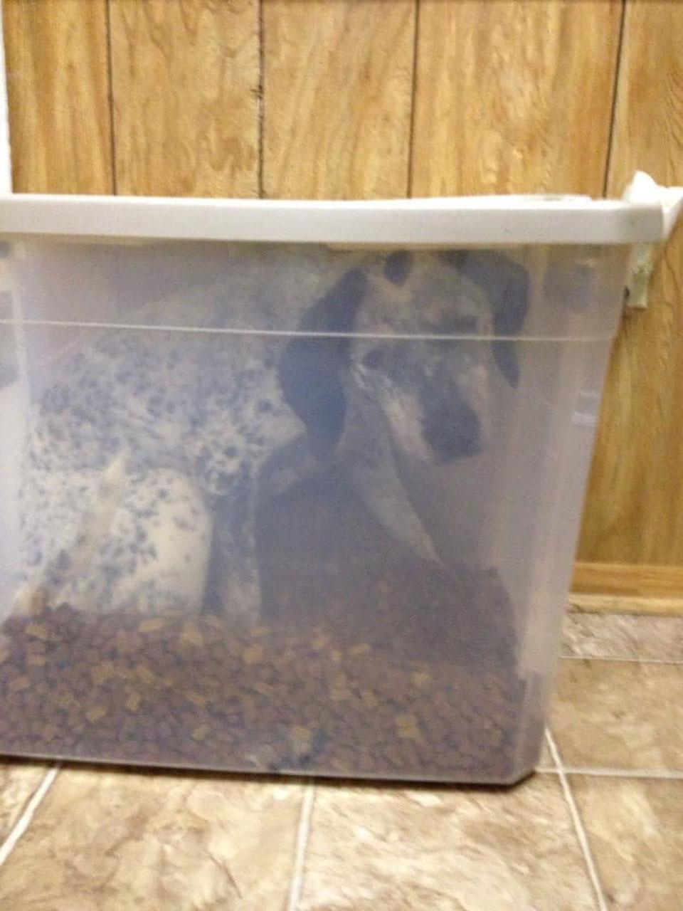 Perro atrapado en recipiente de comida