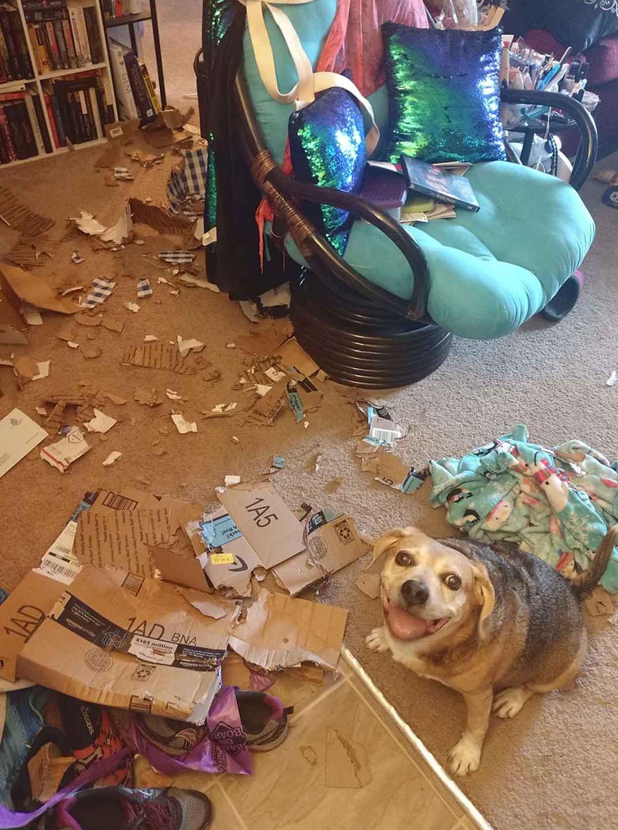 Perro está orgulloso de su desorden