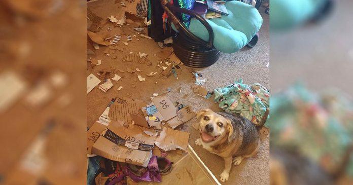 Perro está tan orgulloso del desastre que hizo mientras mamá no estaba