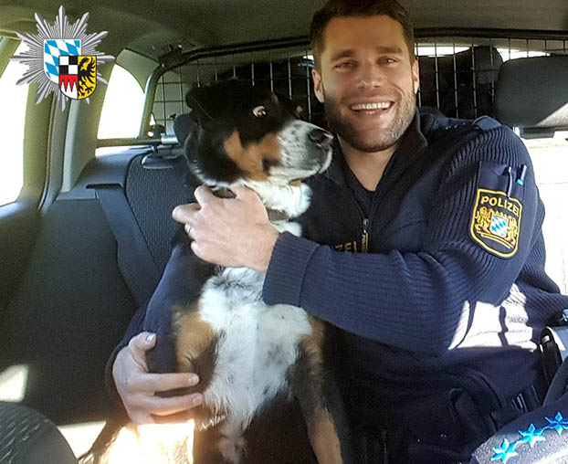 Perro llevado en patrulla