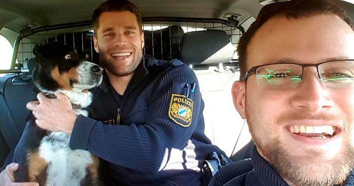 Perro asustado mientras lo abraza un policía