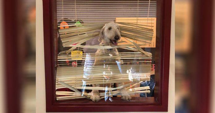 Perro sigue a sus niños a la escuela y termina en la oficina del director