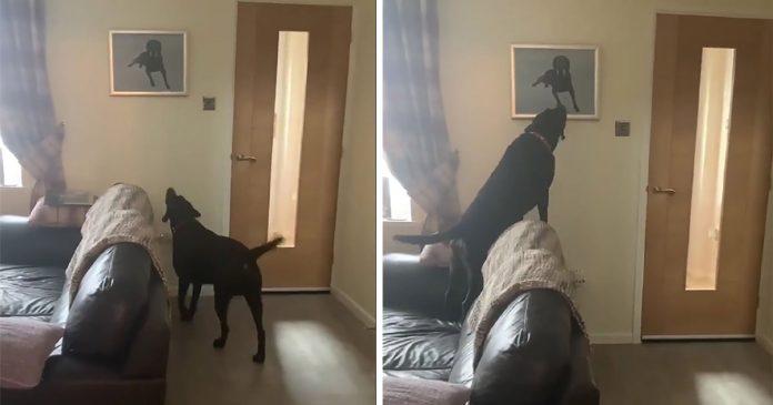Perro tiene la reacción más conmovedora al ver el retrato de su hermano fallecido