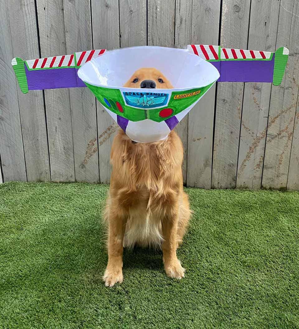 Divertida rutina para decorar el cono del perrito
