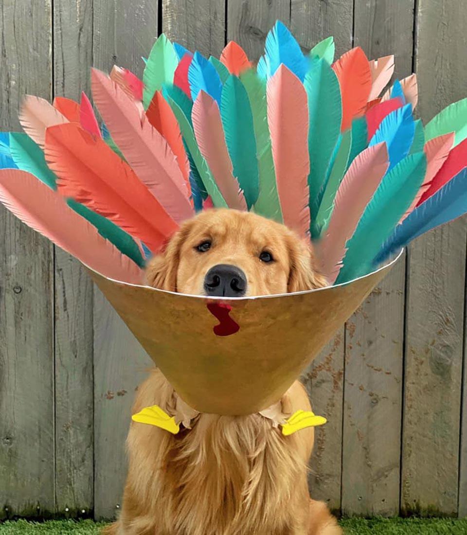Divertidos diseños para el cono del perrito