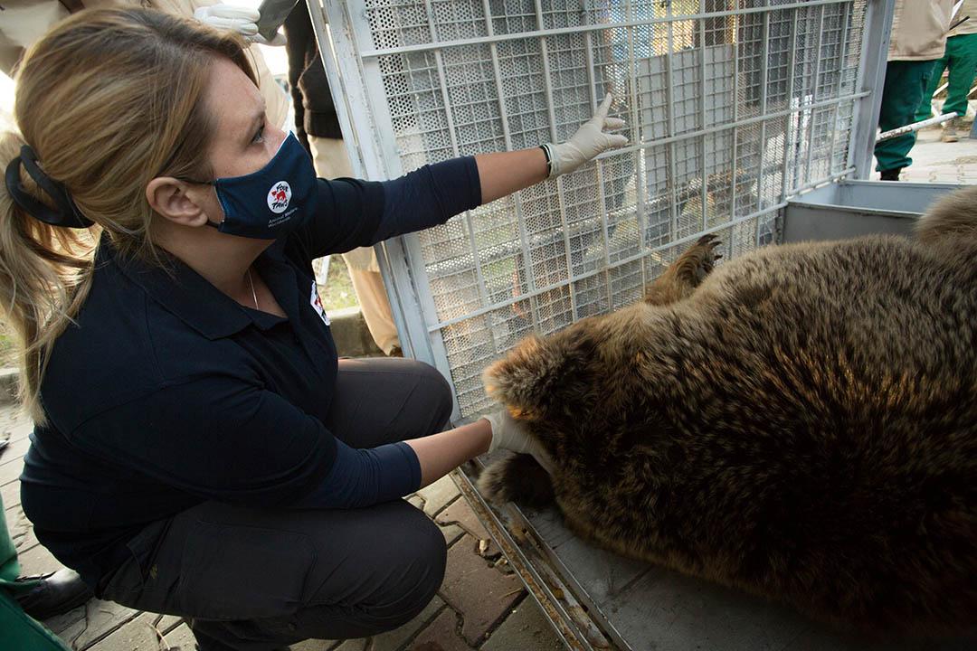 Dos osos atendidos