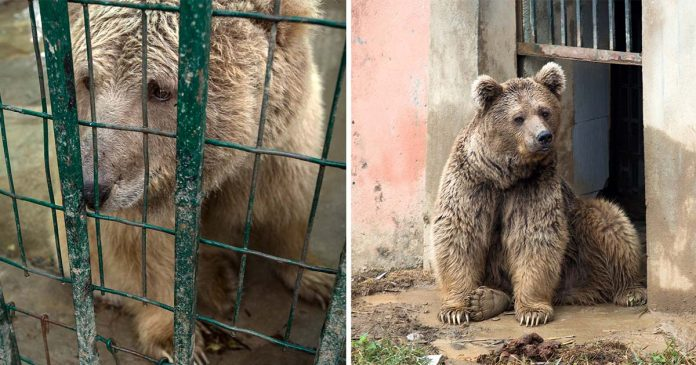 Dos osos liberados zoológico