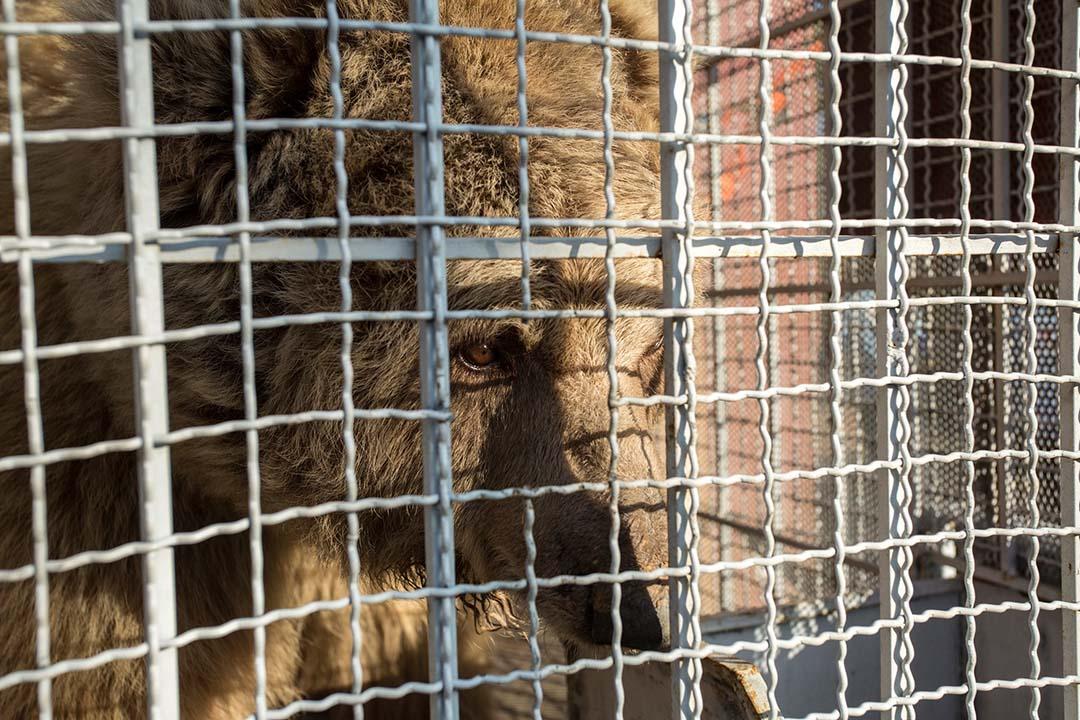 Dos osos liberados