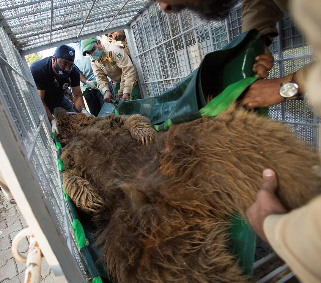Dos osos rescatados