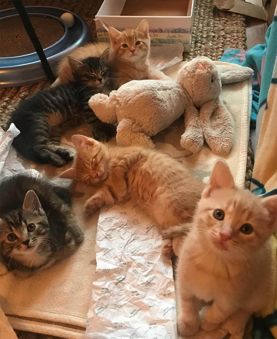 Gatitos con juguetes