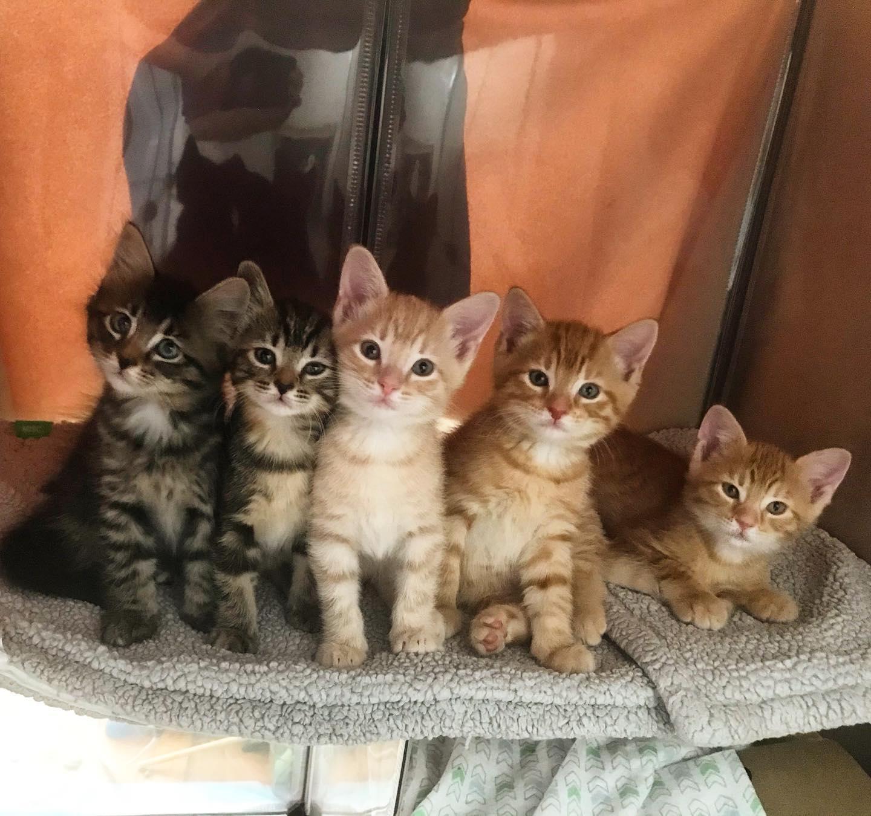 Gatitos creciendo