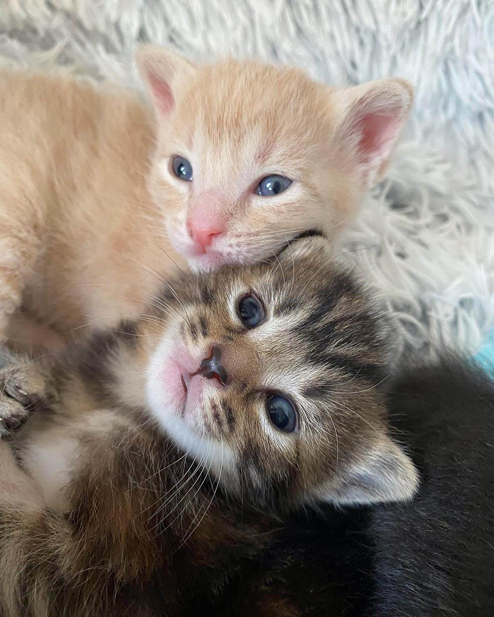 Gatitos prosperando