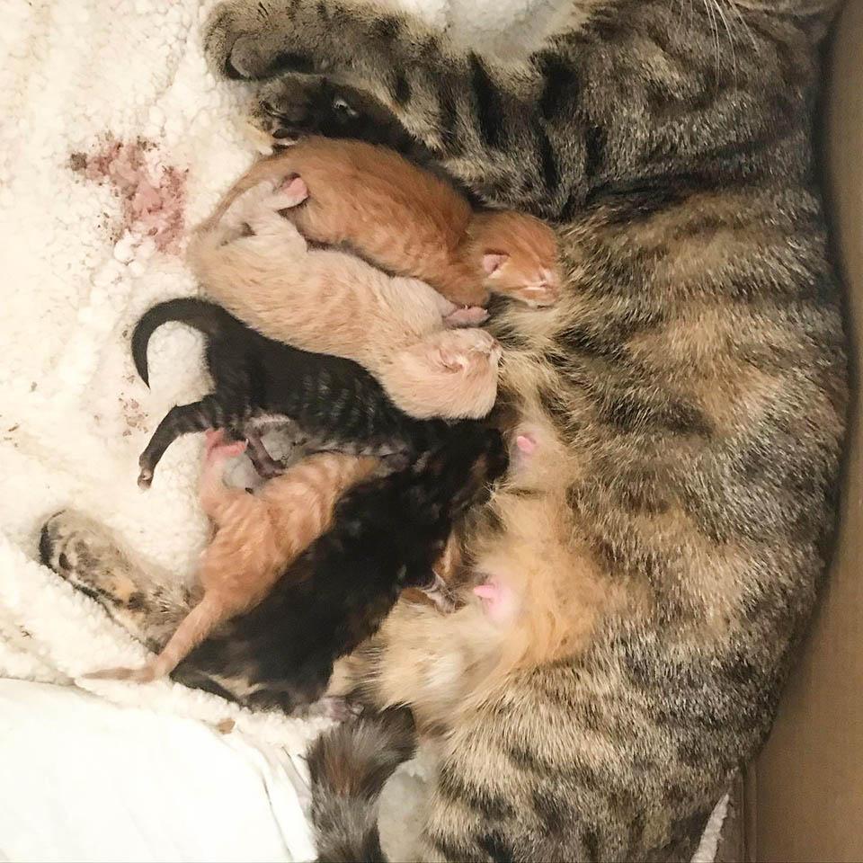 Gatita se acerca con bebés