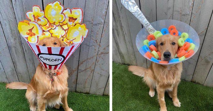 Mujer decora el cono de su perro todos los días para ayudarlo a sentirse mejor
