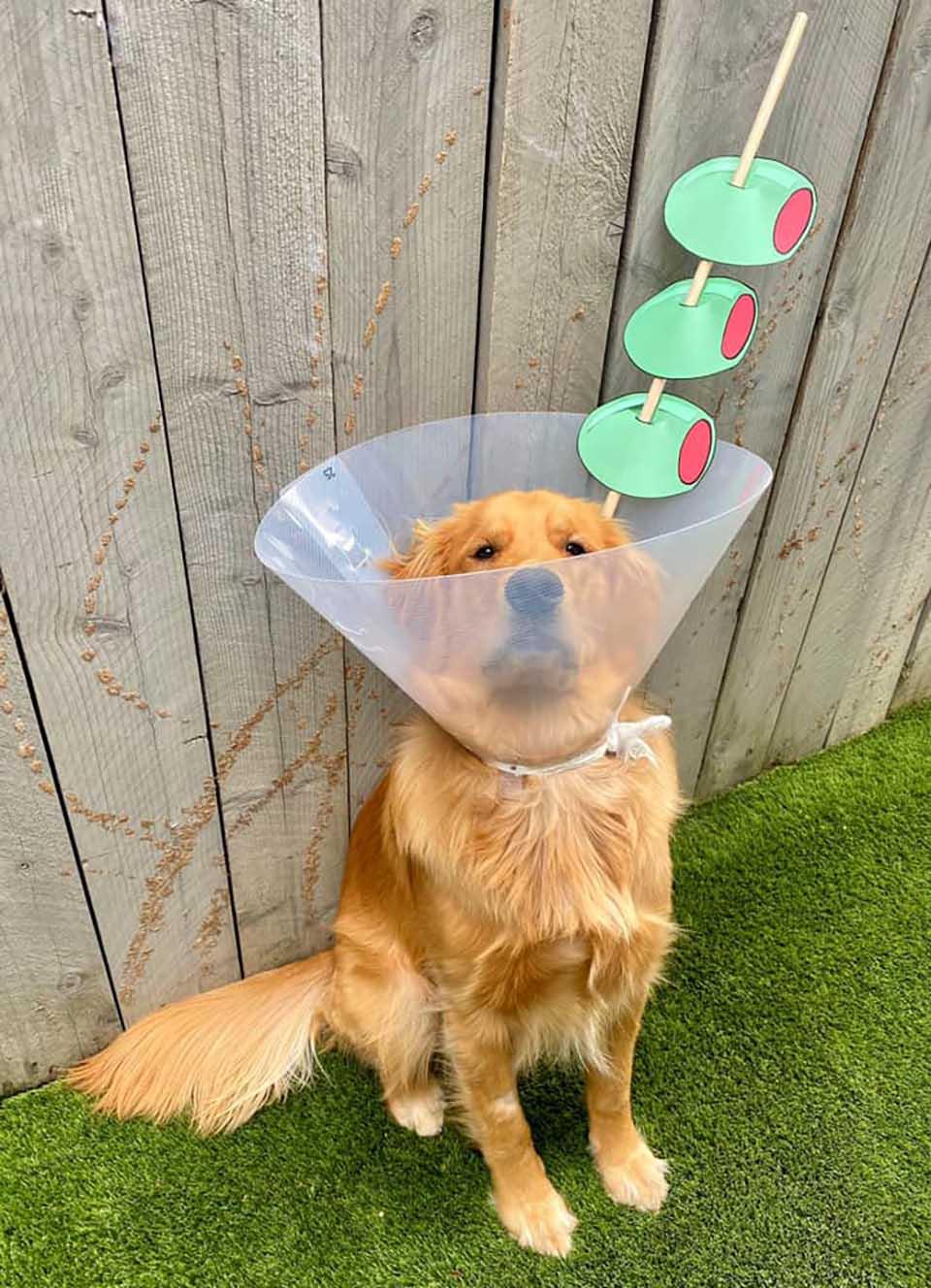 Mujer decora el cono de su perro
