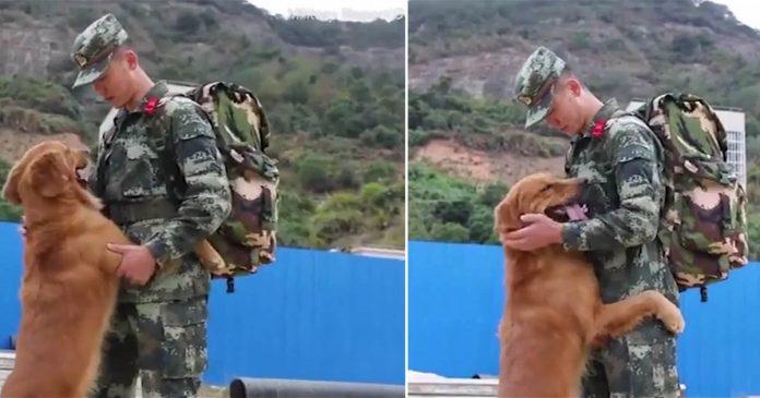 Perro militar se niega a dejar que su adiestrador se vaya después de estar con él dos años