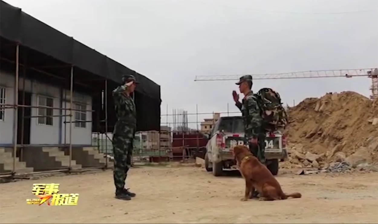 Perro militar y su entrenador